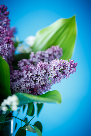 beautiful spring lilac on a blue background photo