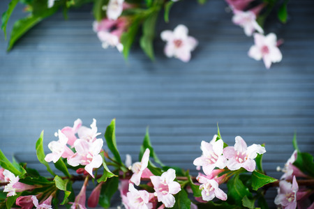 frame of beautiful pink flowers on wooden table photo