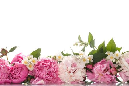 mooie bloeiende pioenrozen op een witte achtergrond