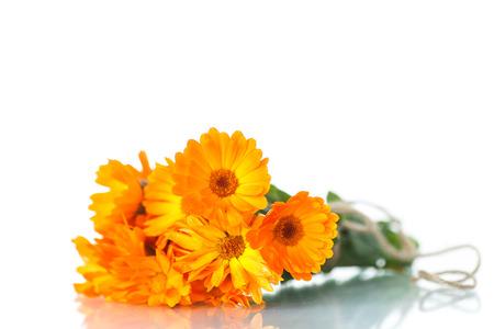 bouquet of orange calendula blossoms on white background photo