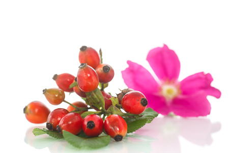 ripe rose hips with a flower on a white background photo