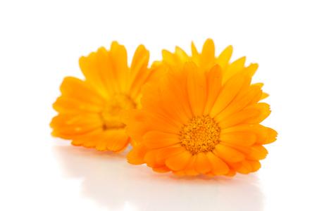 Beautiful blooming orange calendula on white background photo