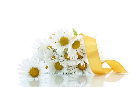 beautiful bouquet of white daisies on a white background photo