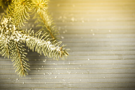 fur-tree branch with snow on the wooden table photo