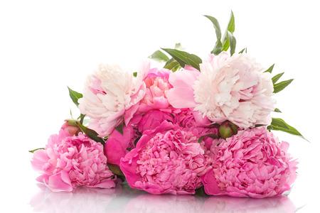 白い背景の上の美しいピンクの牡丹 写真素材