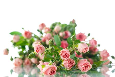 garden frame: beautiful bouquet of pink roses on a white background
