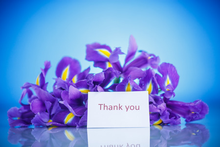 beautiful bouquet of flowers irises on a blue background photo