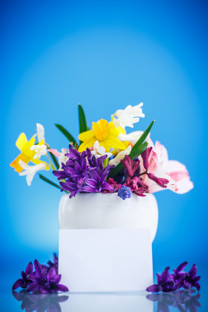 beautiful bouquet of spring flowers on a blue background photo