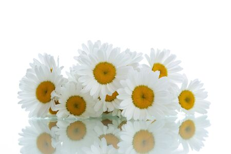 many thanks: beautiful bouquet of white daisies on a white background
