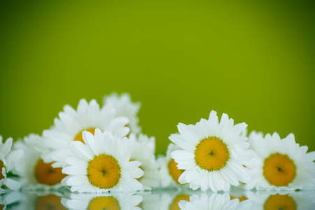 many thanks: beautiful bouquet of white daisies on a green background