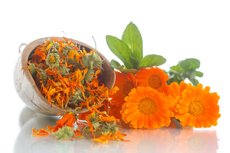 dried calendula flowers on a white background Standard-Bild