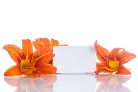 orange lily: Beautiful orange lily on a white background