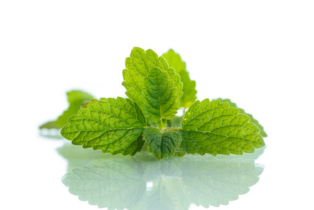fragrant: fresh fragrant mint on a white background