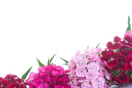 flores de cumpleaños: ramo de claveles brillantes sobre un fondo blanco Foto de archivo