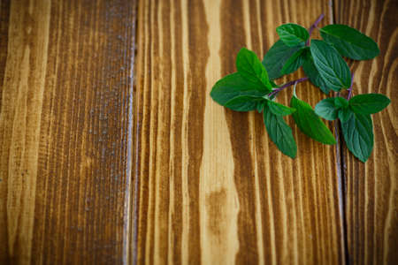 grunge wood: fresh green mint on a wooden table