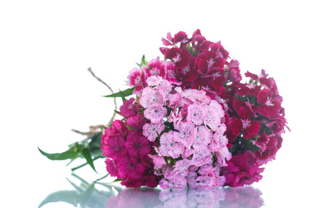 your text: bright bouquet of carnations on a white background