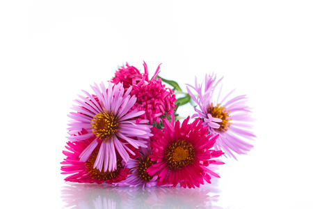 morado: bouquet of red chrysanthemums on a white background Foto de archivo