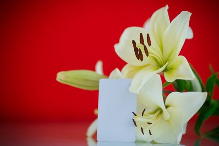 day lily: beautiful blooming lily on an red background Stock Photo