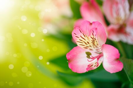 your text: beautiful bouquet of flowers alstroemeria on a green background Stock Photo