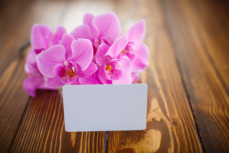 felicitaciones cumplea�os: Beautiful purple phalaenopsis flowers on a wooden table