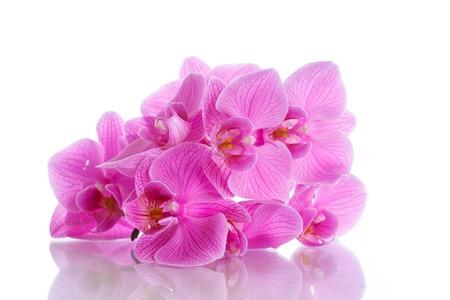Beautiful purple phalaenopsis flowers on a white background Stock Photo