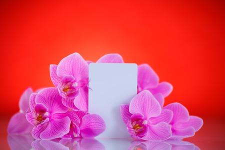 felicitaciones cumplea�os: Hermosas flores de Phalaenopsis p�rpura sobre un fondo rojo Foto de archivo
