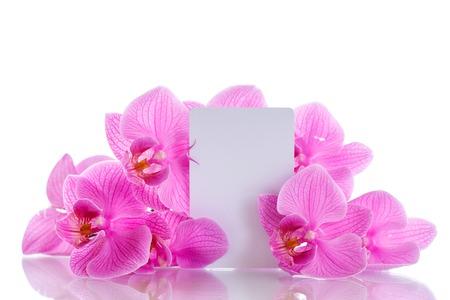 text pink: Beautiful purple phalaenopsis flowers on a white background Stock Photo
