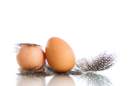 fowl: guinea fowl eggs and feathers on a white background Stock Photo