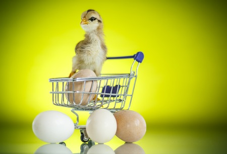 Cute chick in a trolley with eggs on green background
