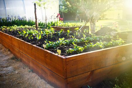 木製の箱に春緑豊かな庭園 写真素材 - 79008519