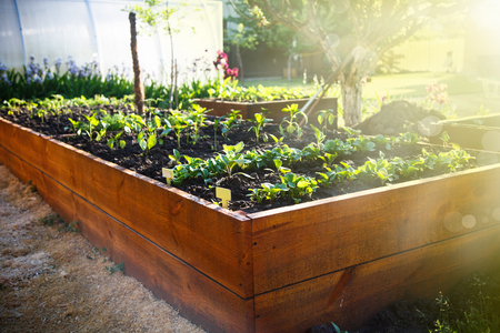 Spring green garden in a wooden box