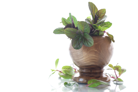 lemon balm: A bunch of fresh spring mint in a wooden vase Stock Photo