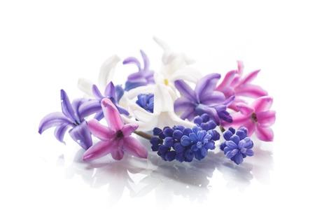 白い背景に春の花の美しい花束