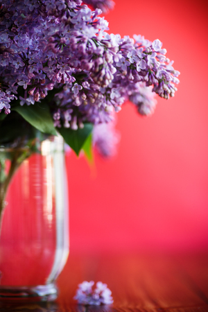 branch of blossoming spring lilac Stock Photo