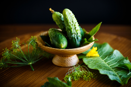 fresh natural organic cucumbers of green color on a wooden table