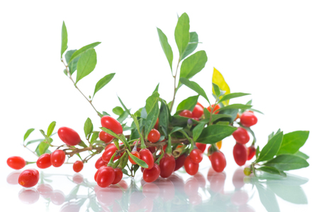 red ripe goji berry on a branch isolated on a white background