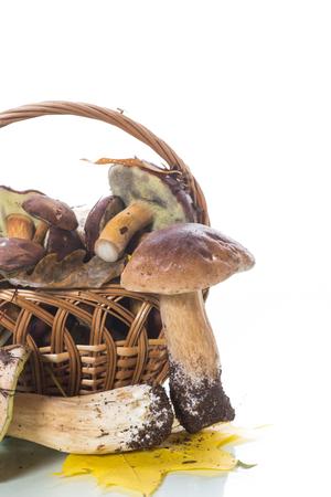 forest fresh natural mushrooms boletus on white background