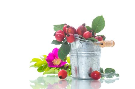 Reife rote Dornbeeren auf einem Zweig auf einem weißen Hintergrund