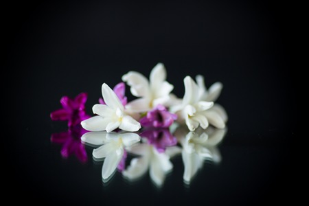 colorful flowers of hyacinth on black background 免版税图像