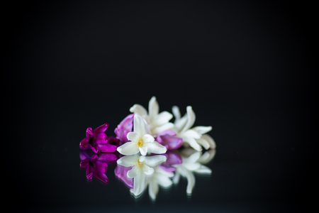 colorful flowers of hyacinth on black background