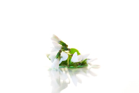 spring small white flowers isolated on white 写真素材