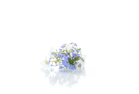 spring small white and blue flowers isolated on white
