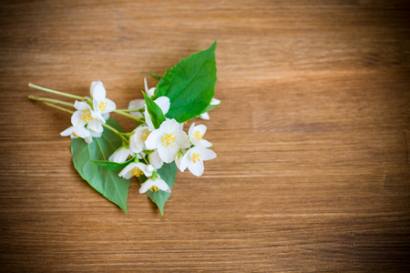 beautiful white jasmine flowers on a branch on a wooden table