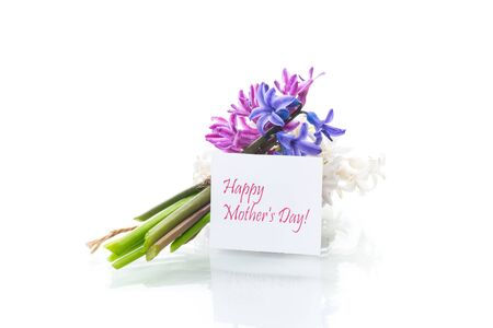 spring beautiful flowers of hyacinth with congratulations for mom