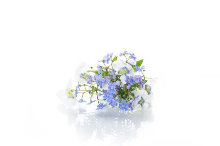 spring small white and blue flowers isolated on white background Standard-Bild