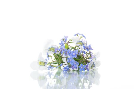spring small white and blue flowers isolated on white background 写真素材