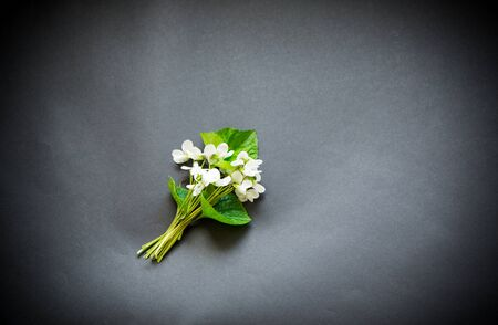 bouquet of beautiful garden white violets on a black background Stock Photo