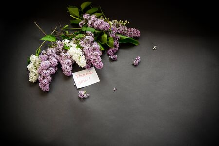 beautiful spring branches of lilac on a black background
