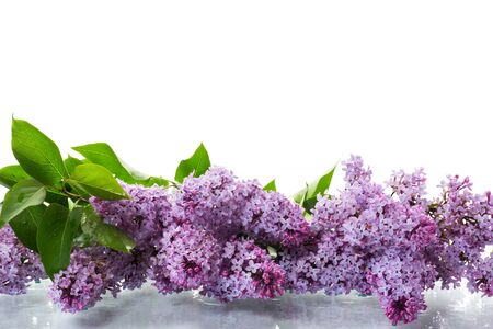 bouquet of beautiful spring flowers of lilac on white background