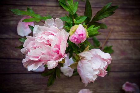 beautiful pink blooming peonies with petals on a wooden table Stok Fotoğraf - 147585062